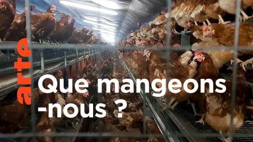Les poules issues d'élevages intensifs sont exploitées dans des conditions atroces