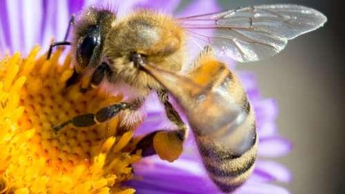 Cette ville en Angleterre fait fleurir le toit de ses 479 abribus pour sauver les abeilles
