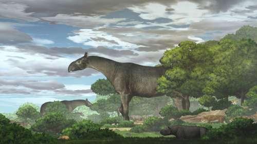 Ce rhinocéros géant découvert en Chine était l'un des plus grands mammifères ayant jamais vécu