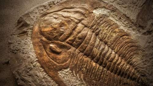 Découverte d'un fossile de trilobite portant les stigmates d'une attaque de scorpion marin géant