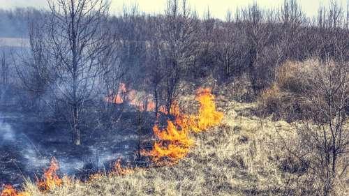 Plus de 17 millions d'hectares de terres ont brûlé en Sibérie