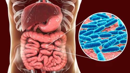 Schizophrénie, dépression et bipolarité partagent des similitudes au niveau du microbiote intestinal