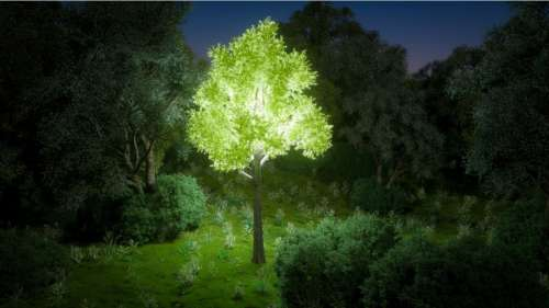 Ces plantes luminescentes pourraient être utilisées pour éclairer les espaces publics