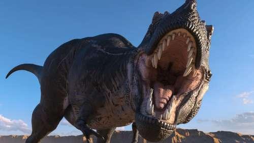 De nouvelles analyses fossiles suggèrent que les T. rex étaient de grands bagarreurs