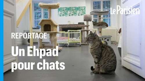 Pas de Scrabble ni de fauteuils roulants dans cette maison de retraite mais des… chats