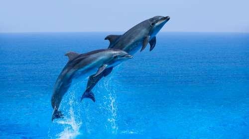 Le saviez-vous ? Les dauphins s'appellent par leur prénom