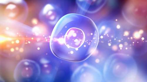 Ce nouveau médicament anti-âge cible spécifiquement les cellules dysfonctionnelles et les élimine