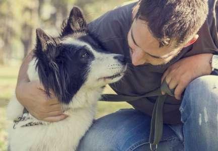 Le chien, meilleur ami de notre cœur @netguide