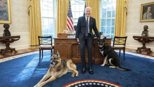 Les chiens mordeurs de Joe Biden renvoyés de la Maison Blanche