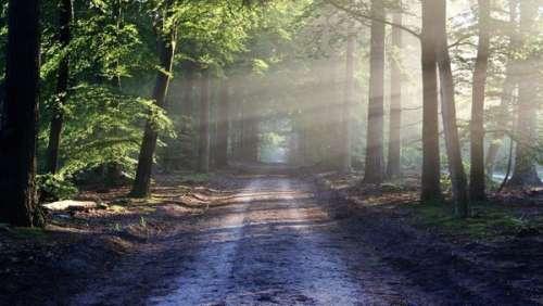 A 3 ans, un garçonnet est retrouvé sain et sauf après trois jours seul en forêt
