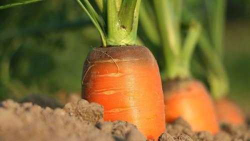 Les bienfaits de l'huile de carotte sur la peau
