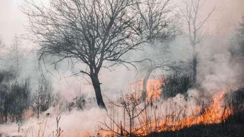 Le terrible incendie cachait un meurtre fratricide