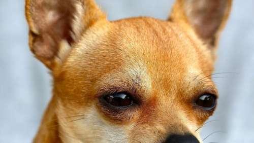 Ziggy : l'incroyable élan de solidarité qui a permis de retrouver (à Cannes) un chien volé à Paris