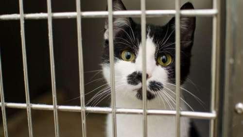 Savoie : 110 chats retrouvés dans une maison aux conditions de vie insalubres