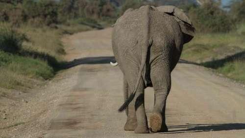 L'incroyable hommage d'un éléphant dévasté par la mort de son gardien