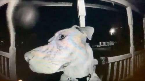Leur chien disparu sonne à leur porte à 3h du matin pour réintégrer le domicile