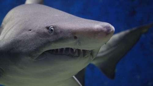 Un père de famille téméraire se bat avec un énorme requin à mains nues pour sauver sa fille