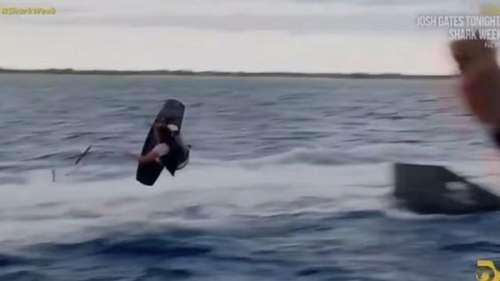 Une star de Jackass se fait mordre la main par un requin lors d'une scène qui tourne mal…