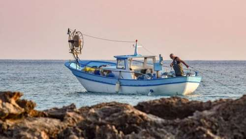 Cet animal improbable sauvé en mer par un pêcheur
