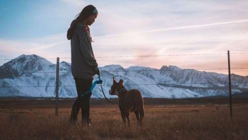Terrifiant ! Une jeune fille sauvagement violée en promenant son chien