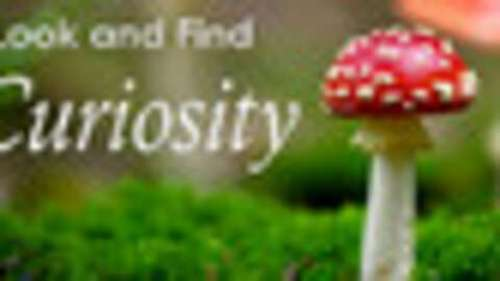Look and Find - Curiosity