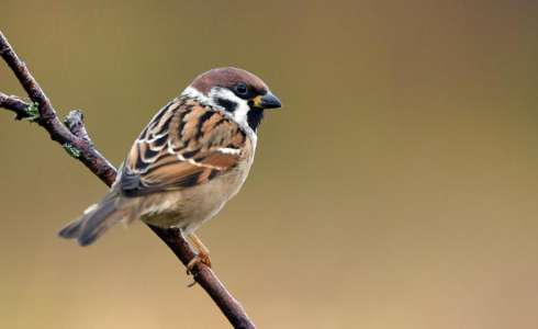 Medical News Today: Global warming may cause birds to shrink