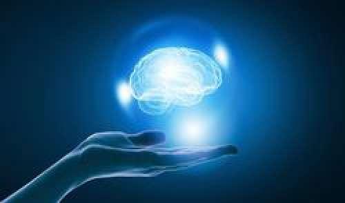 Comment les intestins influencent-ils la mémoire ?