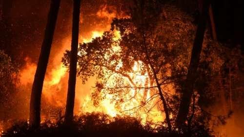Feu de forêt à Anglet: l'incendie est