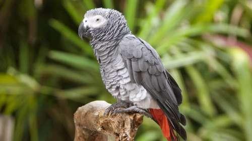 Royaume-Uni: des perroquets retirés temporairement d'un zoo car ils insultaient les visiteurs