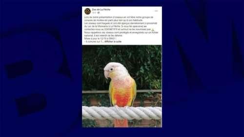 Sarthe: le zoo de la Flèche lance un appel après que plusieurs oiseaux se sont échappés