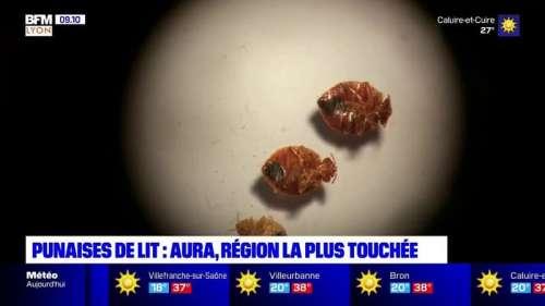 L'Auvergne-Rhône-Alpes, région la plus touchée par les punaises de lit