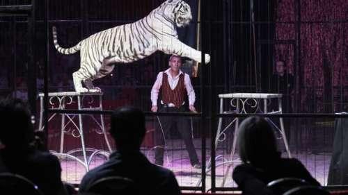 Vers l'interdiction des fauves dans les cirques en France?