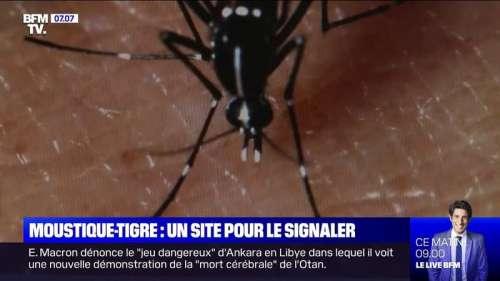 L'Anses lance un site pour signaler la présence du moustique-tigre