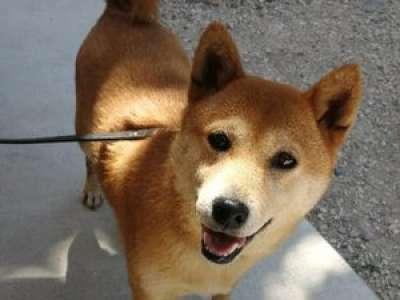 Isère : une chienne abandonnée chez le vétérinaire, deux ans après avoir été adoptée à la SPA