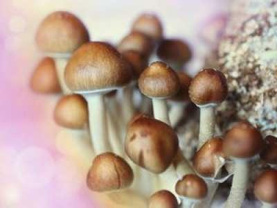 La consommation de champignons pourrait-elle abaisser le risque de cancer de la prostate?