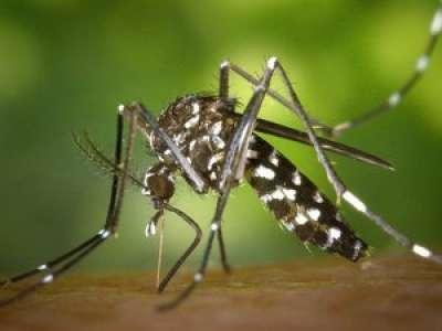 Moustique tigre : un nouveau cas de dengue détecté en Lot-et-Garonne