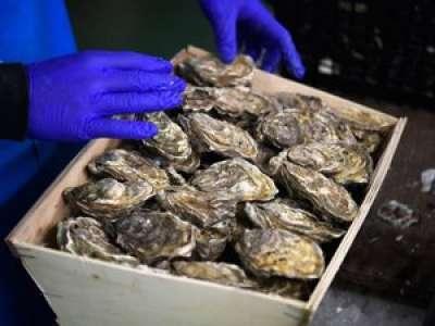 Une huître exceptionnelle de 2,2 kg découverte en Bretagne frise le record du monde