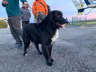 Hautes-Pyrénées : un chien perdu en montagne retrouve son maître grâce aux secouristes CRS