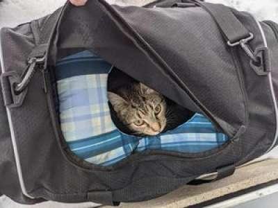 États-Unis : appelée pour un colis suspect, une équipe de déminage découvre en réalité un sac... de chatons