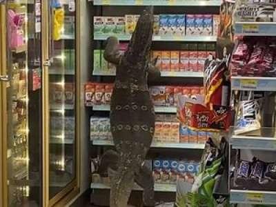 VIDEO. Un énorme varan sème la pagaille dans un supermarché en Thaïlande