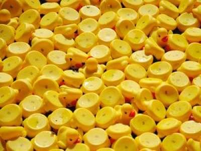 Lot: une course de canards organisée pour la première fois à Cahors