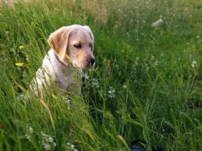 Toulouse. Un chien intoxiqué après avoir ingéré du cannabis dans un parc public