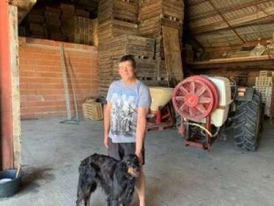 Tarn-et-Garonne : un chien sauve un hangar des flammes à Moissac