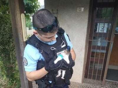 Les gendarmes du Lot sauvent un chaton égaré au bord de l'eau