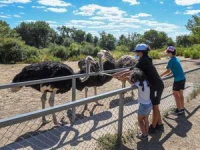 Carcassonne. Le parc australien espère un rebond estival après la crise