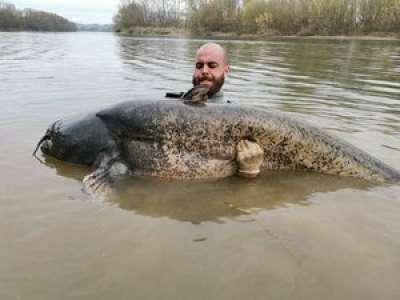 Tarn-et-Garonne : il pêche un silure de 2,65 mètres de long et rentre dans le top 20 mondial