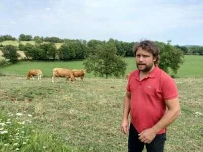 À Fons, deux vaches meurent suite à l'attaque d'un cerf