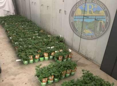 Des centaines de plants étiquetés