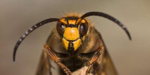 Piqûres d'abeilles, guêpes, frelons: pourquoi et pour qui est-ce mortel? @LAUREPIERRE