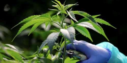 La consommation d'alcool, de tabac etde cannabis en baisse chez les jeunes adolescents en France